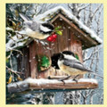 Snow Birds Animal Themed Maestro Wooden Jigsaw Puzzle 300 Pieces