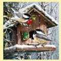 Snow Birds Animal Themed Millenium Wooden Jigsaw Puzzle 1000 Pieces