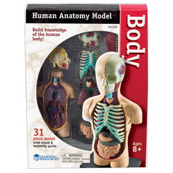 LEARNING RESOURCES MODEL HUMAN BODY ANATOMY