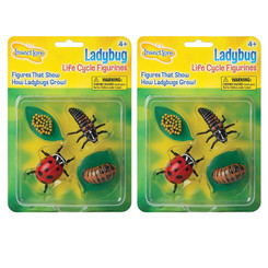INSECT LORE (2 EA) LADYBUG LIFE CYCLE STAGES 6090BN