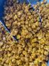 Mango Habanero Popcorn