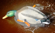 Wonderduck Skimmer Motion Duck Decoy, Drake.