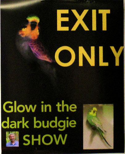 don-burke-glow-budgie-party-poster-500.jpg