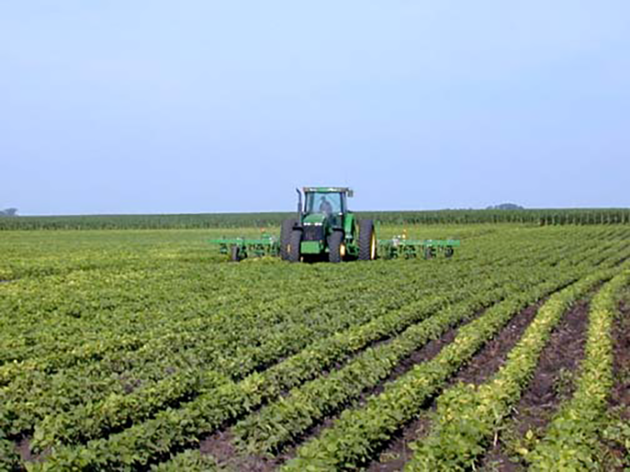 Cultivating Beans