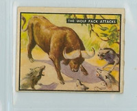 1950 Bring Em Back 33 The Wolf-Pack Attacks Good to Very Good