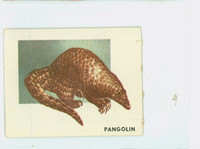 1951 Animals of the World 106 Pangolin Very Good to Excellent Grey Back