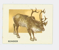 1951 Animals of the World 131 Reindeer Excellent Grey Back