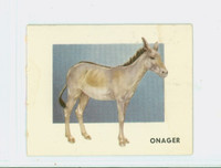 1951 Animals of the World 146 Onager Very Good to Excellent Grey Back