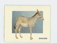 1951 Animals of the World 146 Onager Excellent Grey Back