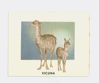 1951 Animals of the World 149 Vicuna Near-Mint Grey Back
