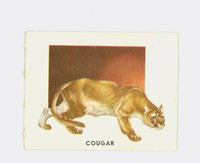 1951 Animals of the World 154 Cougar Excellent Grey Back