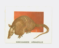 1951 Animals of the World 164 Nine-Banded Armadillo Very Good to Excellent Grey Back