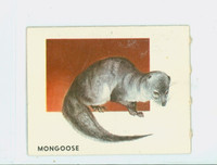 1951 Animals of the World 165 Mongoose Excellent Grey Back