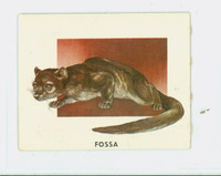 1951 Animals of the World 173 Fossa Very Good to Excellent Grey Back