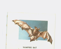 1951 Animals of the World 178 Vampire Bat Excellent Grey Back