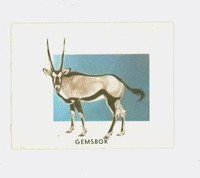 1951 Animals of the World 181 Gemsbok Very Good to Excellent Grey Back