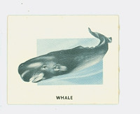 1951 Animals of the World 184 Whale Excellent to Mint Grey Back