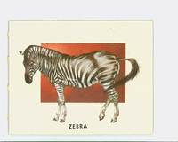 1951 Animals of the World 186 Zebra Excellent to Mint Grey Back