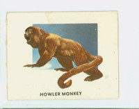 1951 Animals of the World 193 Howler Monkey Very Good to Excellent Grey Back