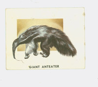 1951 Animals of the World 197 Giant Anteater Very Good to Excellent Grey Back