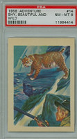 1956 Adventure 14 Wild Bobcat PSA 8 Near Mint to Mint