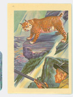 1956 Adventure 14 Wild Bobcat Near-Mint Plus
