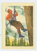 1956 Adventure 74 Tree Climbing Near-Mint Plus