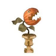 Prickly Pumpkin Plant