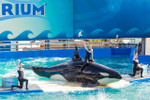 MiamiSightseeingTours.com shuttle and park admission for Miami Seaquarium!