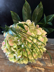 Elegant display of one antique green hydrangea in clear square cube - accented with bear grass, italian ruscus and aralia leaves