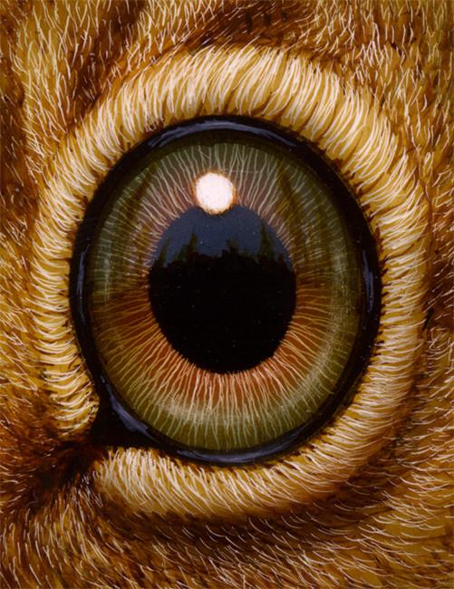 Eye 130