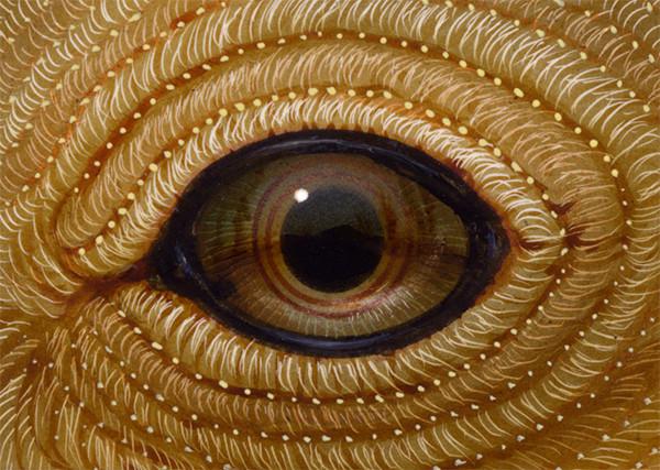 Eye 134