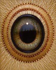 Eye 136
