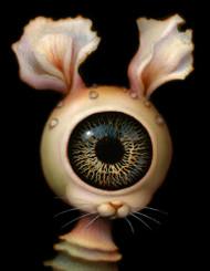 Eye Bunny 03