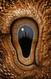 Eye 142