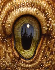 Eye 144