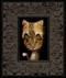 Cat 023 framed