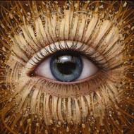 Eye 113