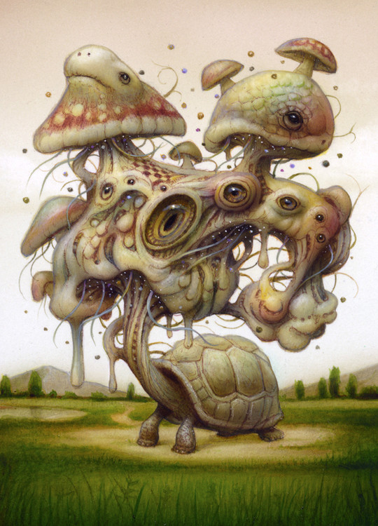 Tripping Turtle