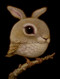 Rabbit Bird 03