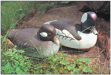 Bufflehead pattern