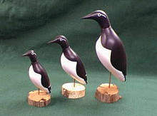 Common Murre Decoys