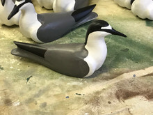 Gray-backed Tern Decoys