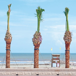 Three Palms // HTX106