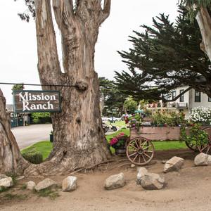 Mission Ranch Tree // CA171