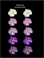 43350 Fruit Blossom Purple Set