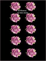 45215 Rose Pink