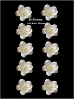 42215  Blossoms Ivory