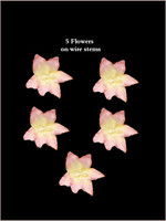 62025 Lillies Pink/Yellow