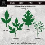 Group  6 Leaves